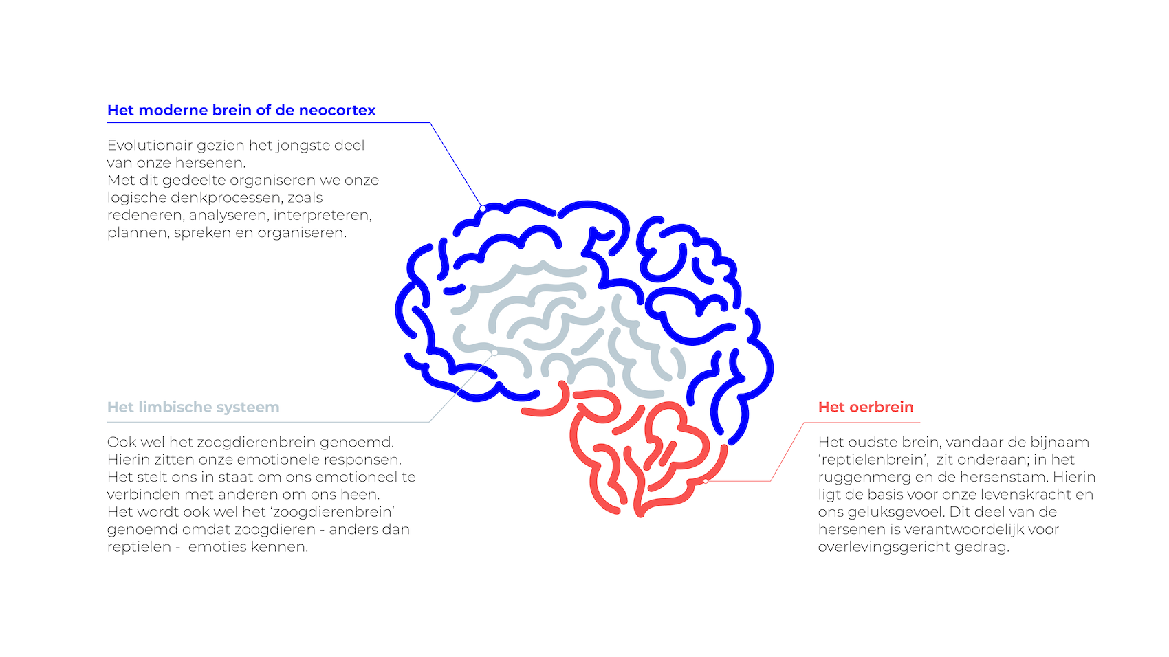 visualisatie van het brein in drie delen